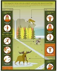 What to do when you see a wild animal.