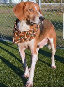 Bronze Award: Helping Pets Get Adopted
