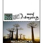 Mini Postcards | Madagascar