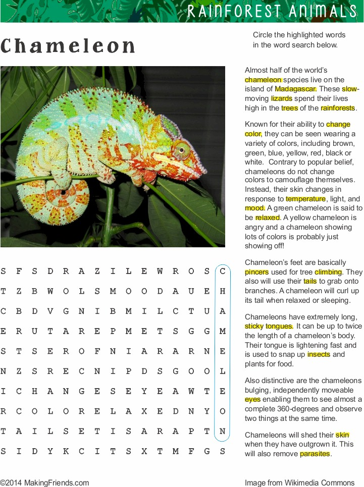 Fact Sheet And Word Search For Chameleon Habitat