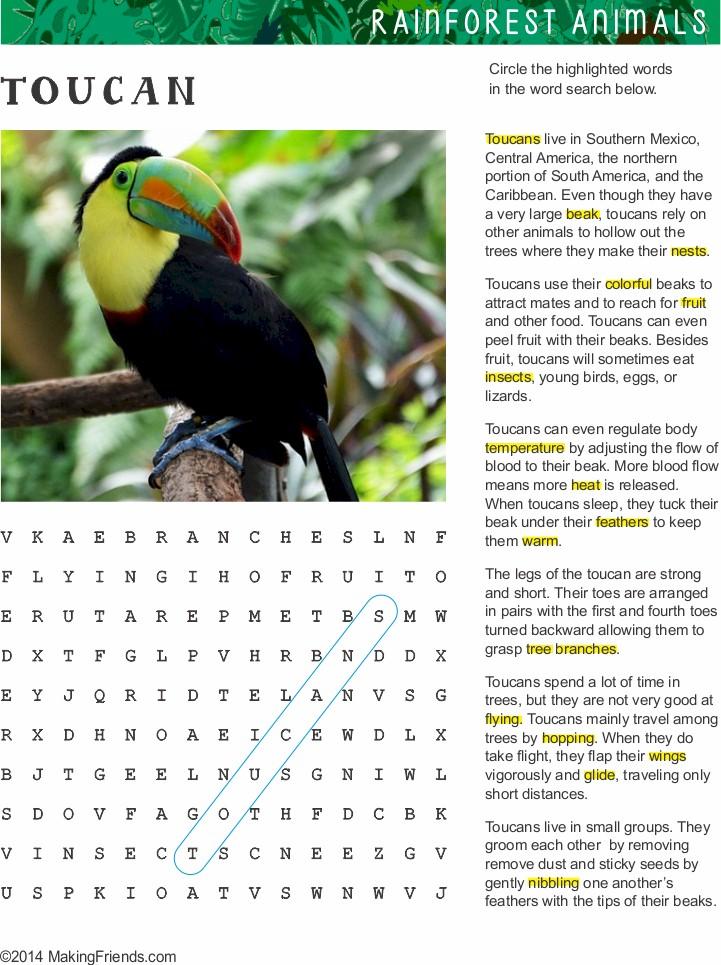 rainforest-tucan