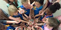 Daisy Troop 40359 with their painted rocks.