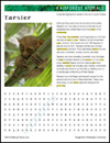 rainforest-animal-habitat-tarsier-thumb