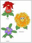 daisy_flower-faces2-color