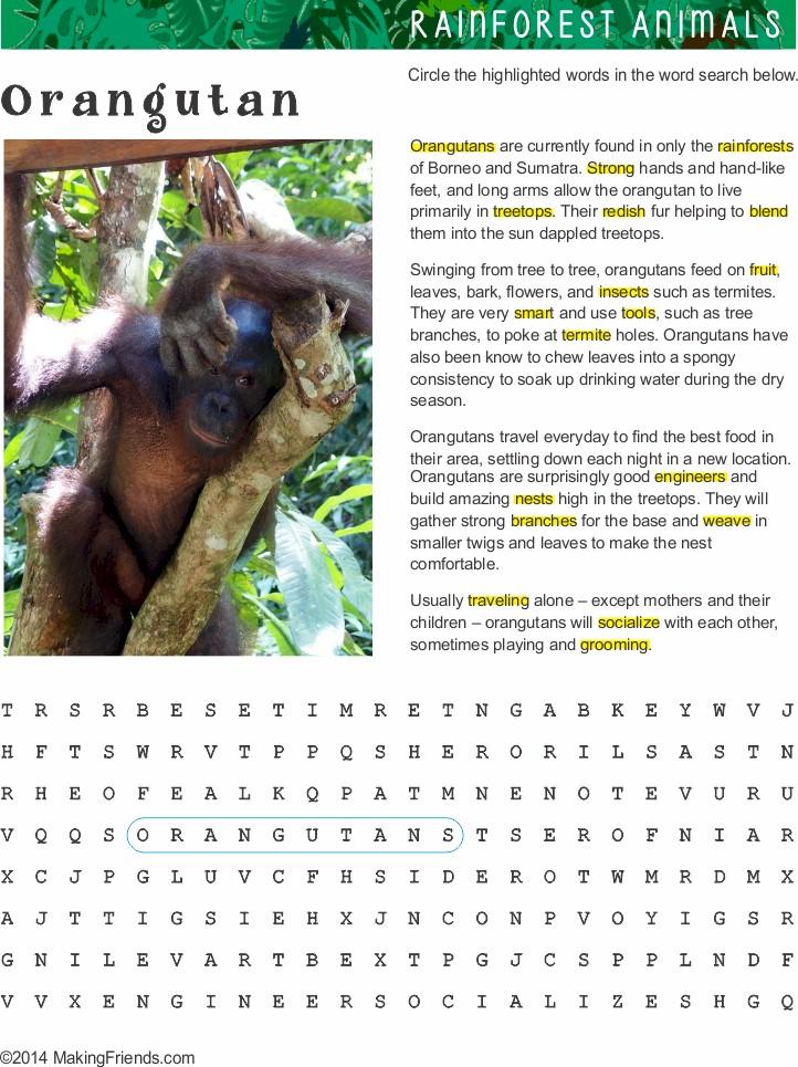 Orangutan Work Sheet