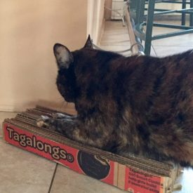 Girl Scout Recycled Box Cat Scratcher