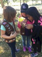 Earn a nature patch by learning about bugs. Brownie troop 591 from Wauconda, Illinois observed bugs then let them go.