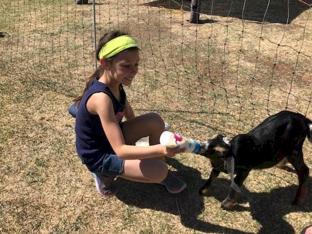 Brownie Girl Scouts Feeding Baby Goats