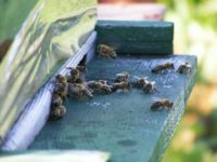 Protecting Honey Bees