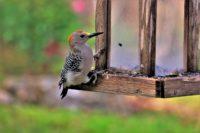 Volunteer for Birds