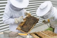 Start a bee farm.