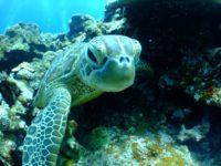 Sea Life Community Service