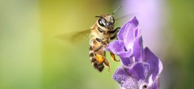 Honey Bee Advocate Program