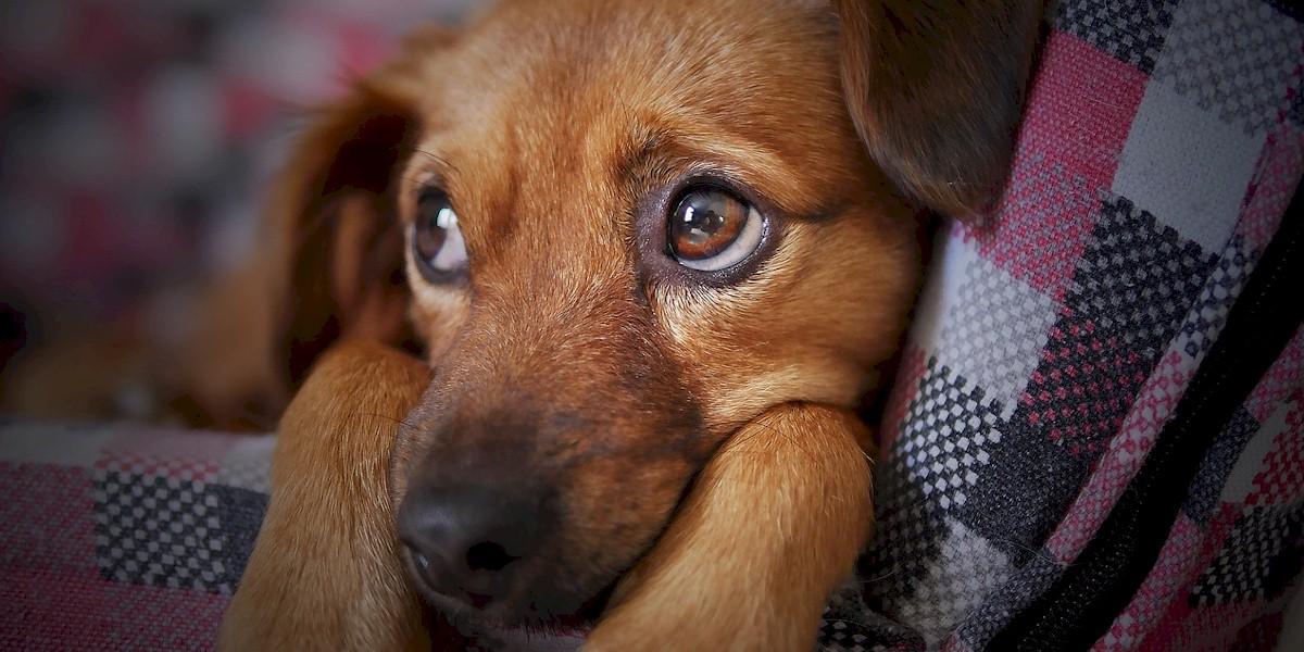 Pet Advocacy