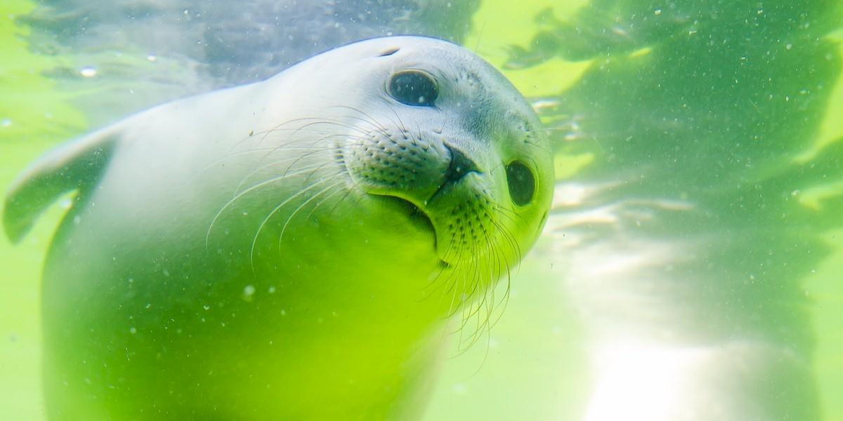 Sea Life Advocacy