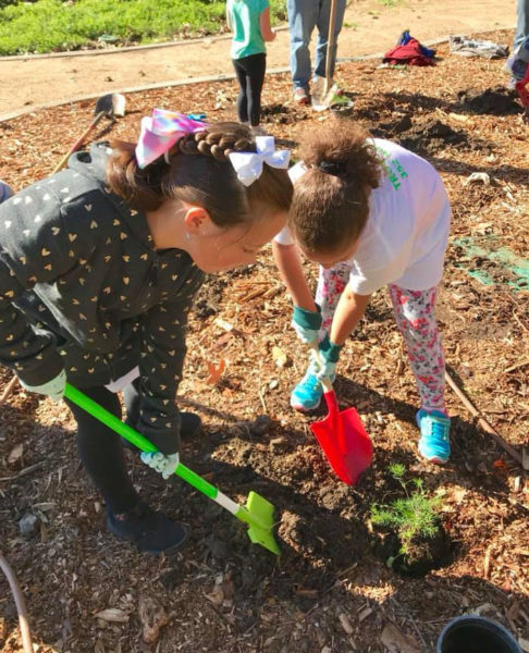 Girl Scouts planting trees.