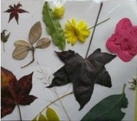 girl scout patches, fall and nature crafts